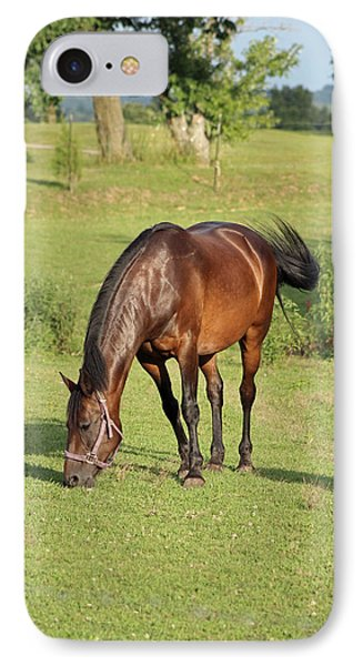 Grazing Mare IPhone Case by Lorna Rogers Photography