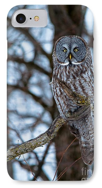 Great Beauty Phone Case by Cheryl Baxter