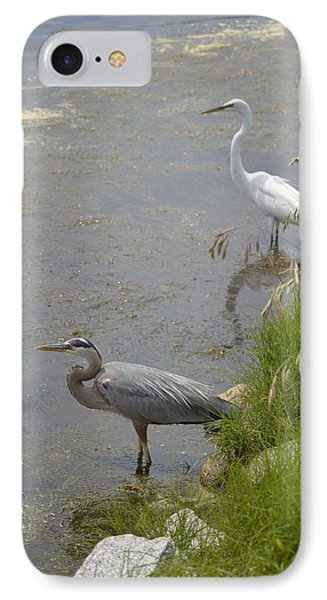 Great Blue And White Egrets IPhone Case by Judith Morris