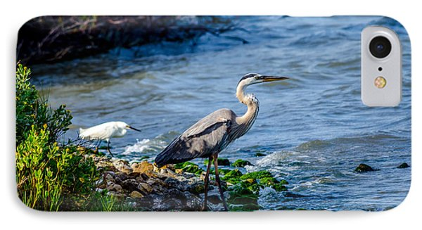 Great Blue Heron And Snowy Egret At Dinner Time IPhone Case