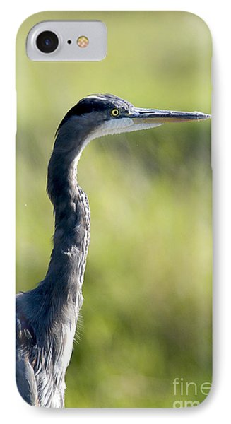 Great Blue Heron Backlit IPhone Case by Sharon Talson