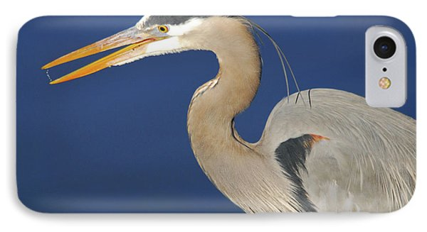 Great Blue Heron, Commonwealth Lake IPhone Case by Michel Hersen