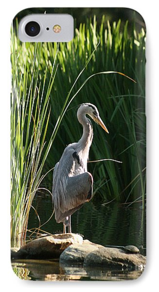 Great Blue Heron IPhone Case by Ellen Henneke