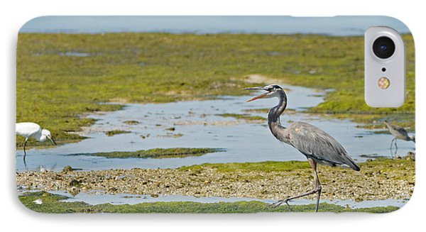 Great Blue Heron In Florida IPhone Case by Natural Focal Point Photography