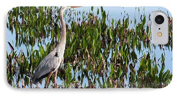 Great Blue Heron In Pickerelweed IPhone Case