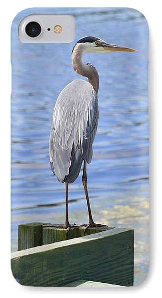 Great Blue Heron IPhone Case by Judith Morris