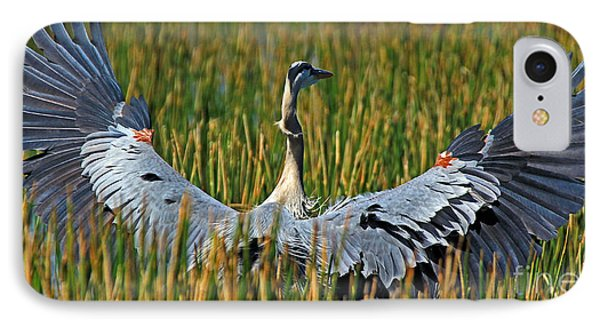 IPhone Case featuring the photograph Great Blue Heron Landing by Larry Nieland