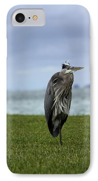 Great Blue Heron IPhone Case by Marta Alfred