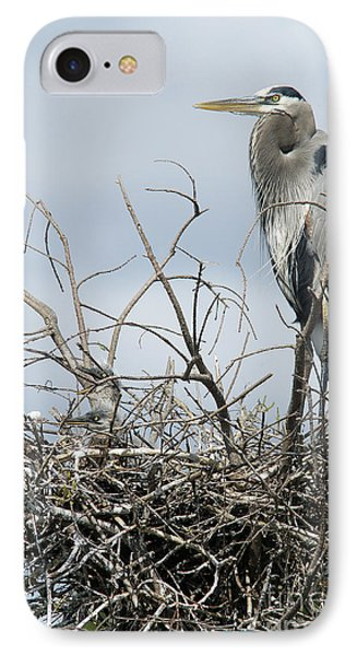 Great Blue Heron Nest With New Chicks IPhone Case by Jane Axman