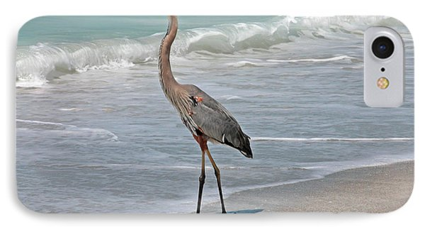 Great Blue Heron On Beach IPhone Case by Mariarosa Rockefeller