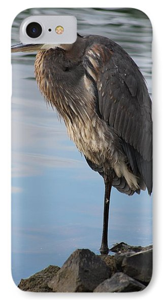 IPhone Case featuring the photograph Great Blue Heron One Legged Stance by Robert Banach