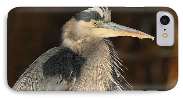 Great Blue Heron Portrait Phone Case by Daniel Behm