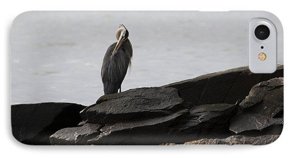 IPhone Case featuring the photograph Great Blue Heron Preening by Rebecca Sherman