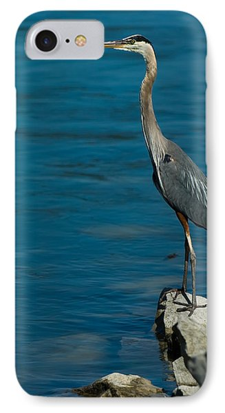 Great Blue Heron IPhone Case by Sebastian Musial