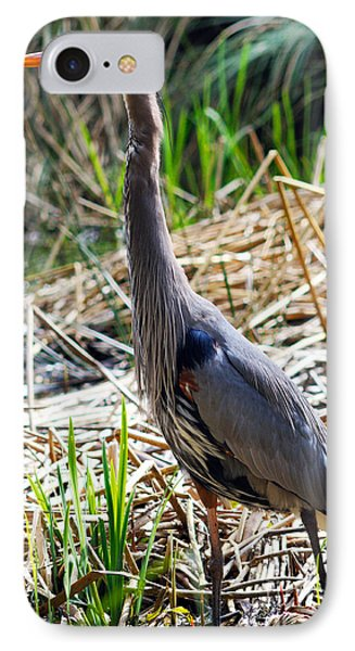 Great Blue Heron Standing Tall IPhone Case by Terry Elniski