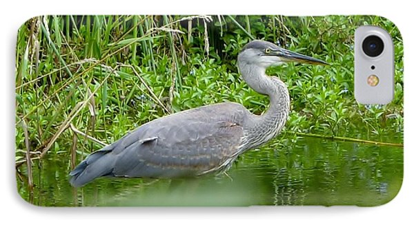 IPhone Case featuring the photograph Great Blue Heron  by Susan Garren
