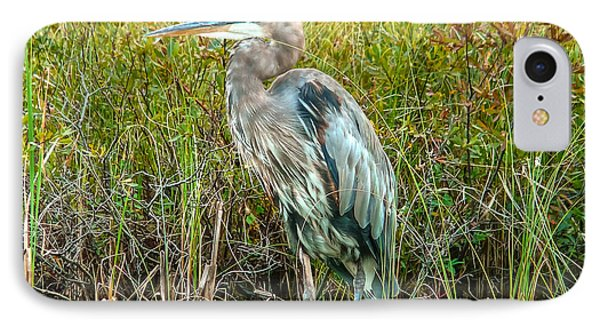 Great Blue Heron Waiting For Supper IPhone Case by Eti Reid