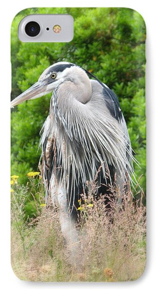 Great Blue Heron Watching And Waiting IPhone Case by Brian Chase