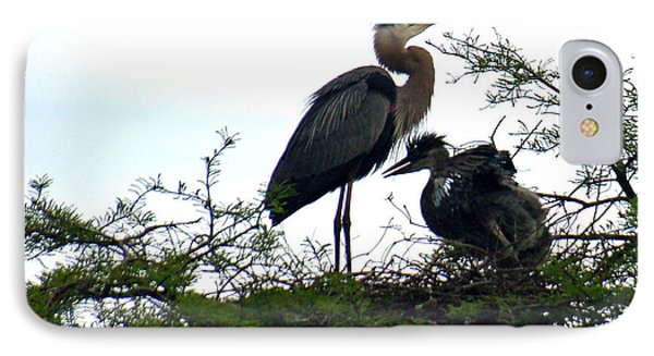 Great Blue Heron With Fledglings II Phone Case by Suzanne Gaff