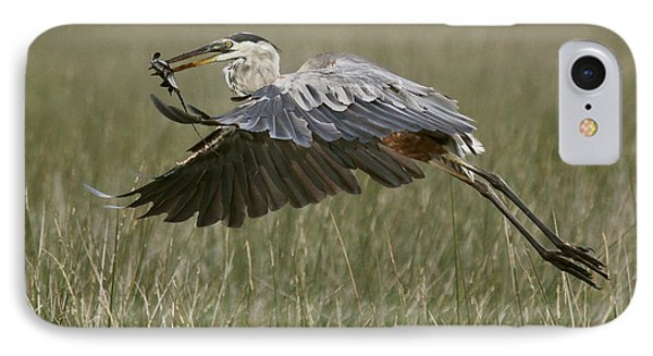 Great Blue Heron With Lunch IPhone Case by Myrna Bradshaw
