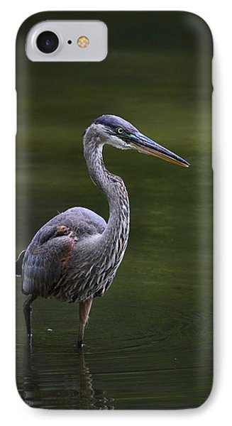 Great Blue Stalking IPhone Case by Mike Farslow