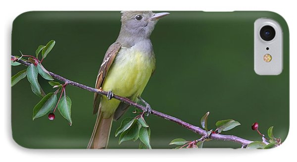 Great Crested Flycatcher IPhone Case by Daniel Behm