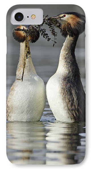 Great Crested Grebe Courtship IPhone Case