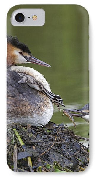 Great Crested Grebes Feeding Chick IPhone Case by Dickie Duckett