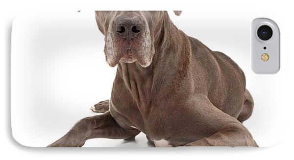 Great Dane Dog Isolated On White IPhone Case