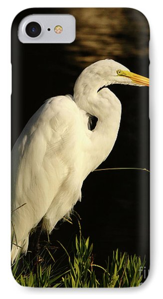 Great Egret At Morning Phone Case by Robert Frederick