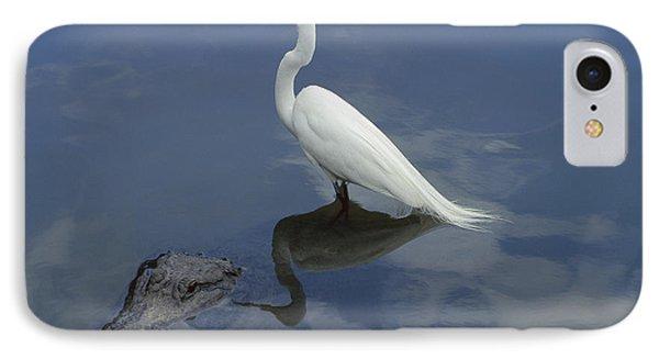 Great Egret Atop American Alligator IPhone Case by Heidi & Hans-Juergen Koch