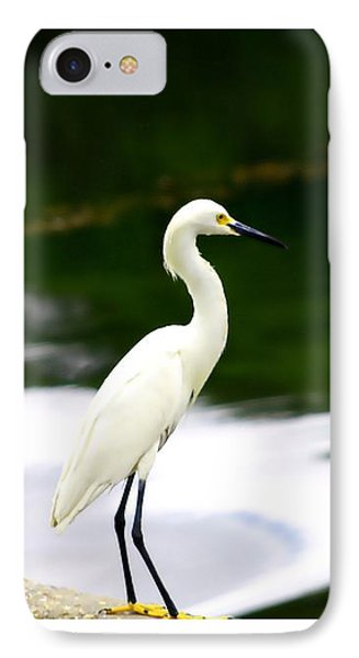 IPhone Case featuring the photograph Great Egret by Debra Forand