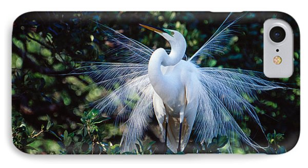 IPhone Case featuring the photograph Great Egret Displaying Plumes by Bradford Martin