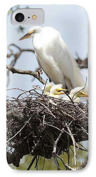 Great Egret Nest With Chicks And Mama IPhone Case by Carol Groenen