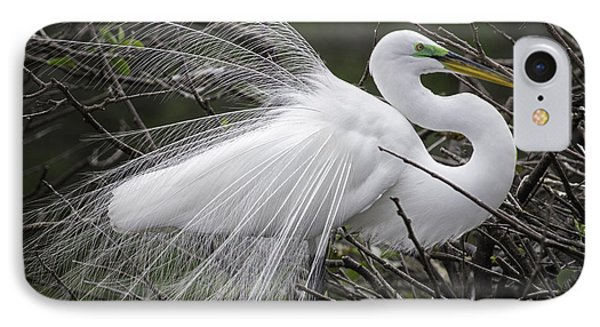 Great Egret Preening IPhone Case by Fran Gallogly