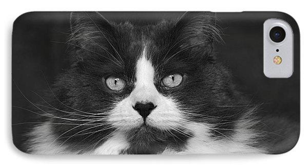 Great Gray Cat IPhone Case