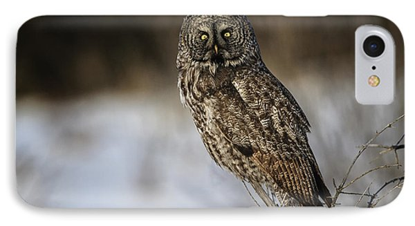 Great Gray Owl 2 IPhone Case by Gary Hall