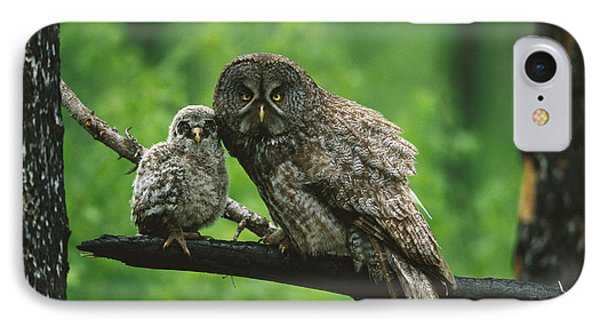 Great Gray Owl With Chick Saskatchewan IPhone Case
