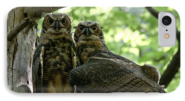 Great Horned Owls Phone Case by Cheryl Baxter