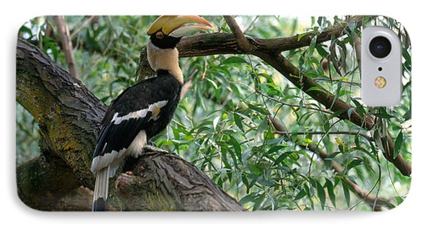 Great Indian Hornbill IPhone Case by Art Wolfe
