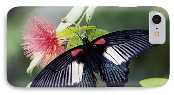 Great Mormon And Mimosa - Fs000581 IPhone Case