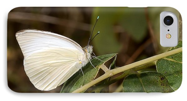 Great Southern White Butterfly Phone Case by Rudy Umans