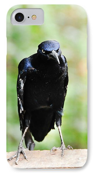 Great Tailed Grackle IPhone Case by Bonnie Fink