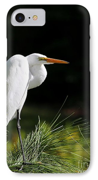 Great White Egret In The Tree IPhone Case by Sabrina L Ryan