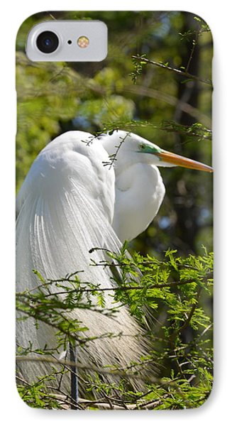 Great White Egret On Nest IPhone Case by Judith Morris