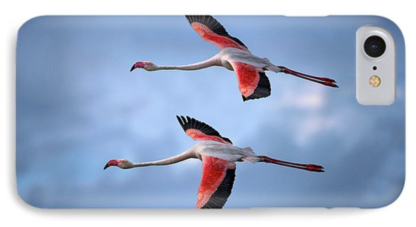 Greater Flamingos IPhone Case