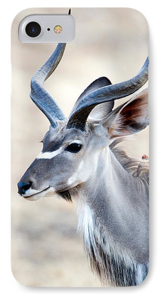 Greater Kudu Tragelaphus Strepsiceros IPhone Case by Panoramic Images