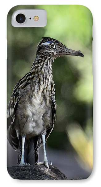 Greater Roadrunner  IPhone 7 Case