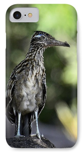 Greater Roadrunner  IPhone 7 Case by Saija  Lehtonen