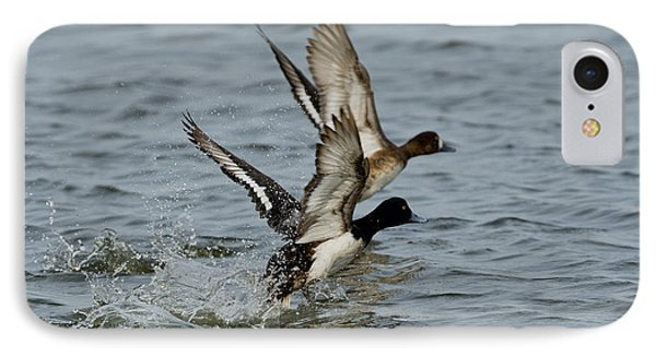 Greater Scaup Pair IPhone Case